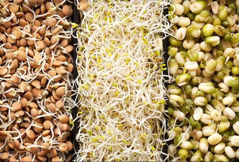 soia e germogli di frumento